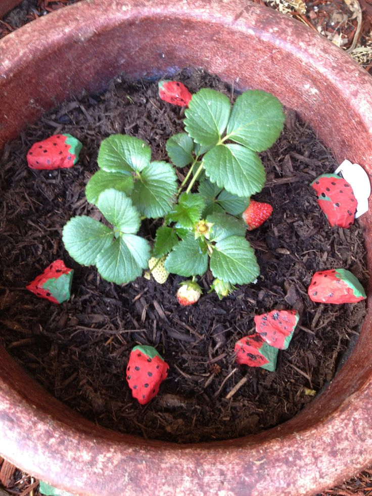 how to keep birds away from strawberries