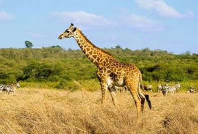 Zanzibar  SAFARI E MARE