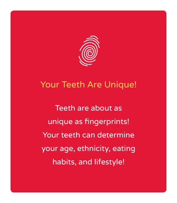 Your teeth are as unique as your fingerprint!