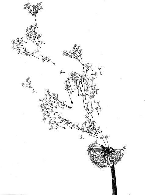 dandelions sketch