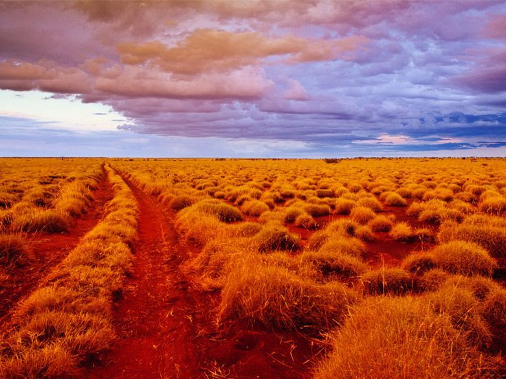 Follow the Canning Stock Route, a bush track traversing the Little Sandy, Great Sandy and Gibson Deserts in WA. Four wheel drive access only.