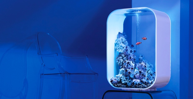 biorb life 60 marine aquarium pinterest life. Black Bedroom Furniture Sets. Home Design Ideas