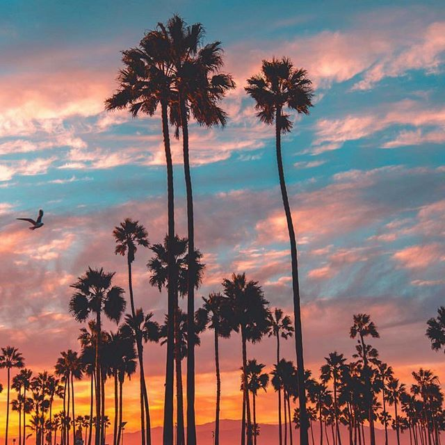 Watch our insta-story to see where we are spending the Holidays! . . Los Angeles... | http://ift.tt/2b7Z089 #travel #destination #places for #rich #vacation and #holiday around #world. #Get #hotels #Deals at http://ift.tt/2b7Z089 #natgeotravel #agoda #expedia #lonelyplanet