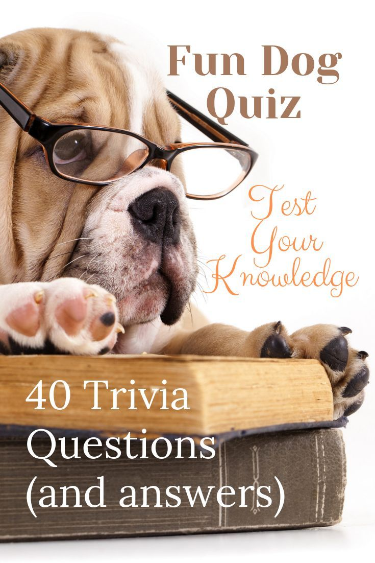Dog Trivia Questions And Answers Dog Quiz Breeds Facts Waggy Tales Dog Quiz Trivia Questions And Answers Trivia Questions