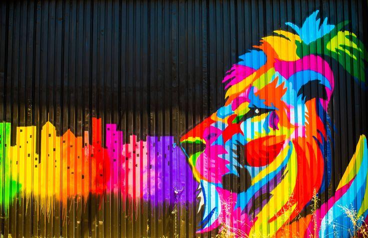 Multicolored Lion Graffiti Graffiti Wallpaper Lion Art Graffiti