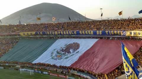 TIGRES de México #U.A.N.L