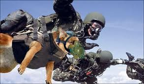 War dogs flying with their leaders