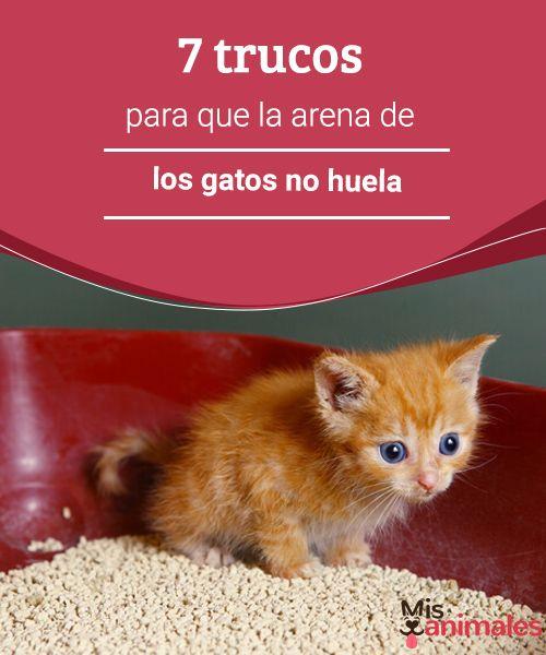 7trucos para que la arena de los gatos no huela   Evitar que la arena de los gatos no inunde tu casa de malos olores no es tarea fácil pero tampoco imposible. Te contamos algunos trucos para lograrlo. #trucos #arena #gato #consejos