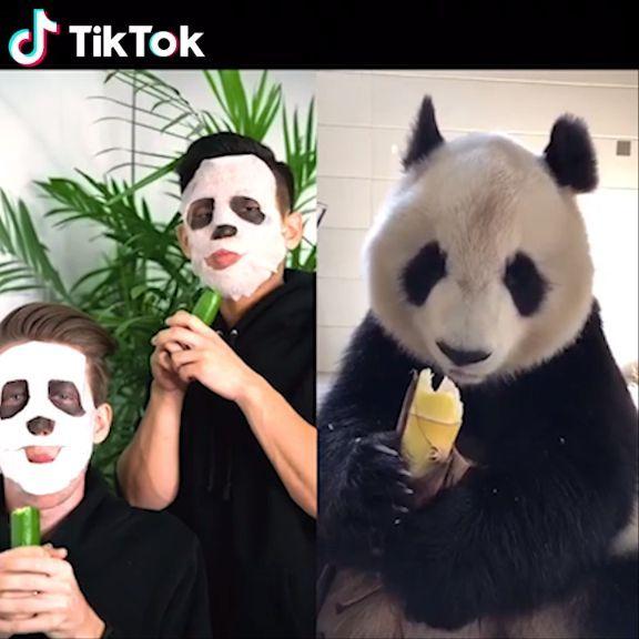 Eating Food Like A Cute Panda Tiktok Is A Global Video Community Which Makes I Efeitos Especiais Engracado Panda