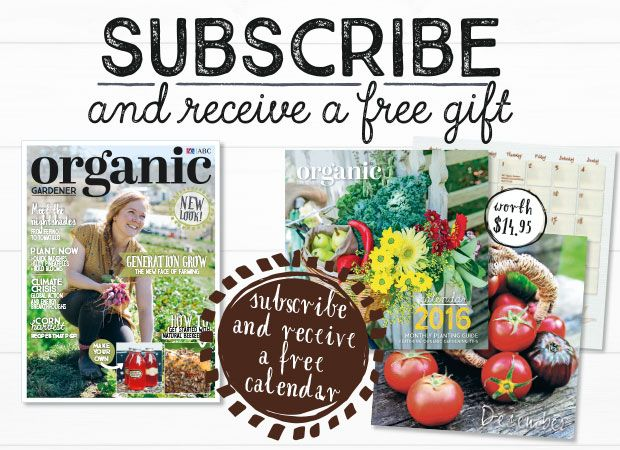 Subscribe now! - 1 Year - $49.95