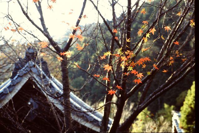 金蔵寺 1993年11月22日撮影