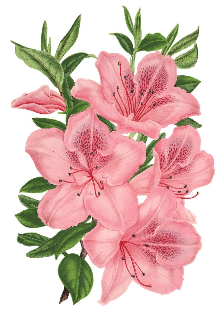 Pink Bunch Of Flowers Drawing