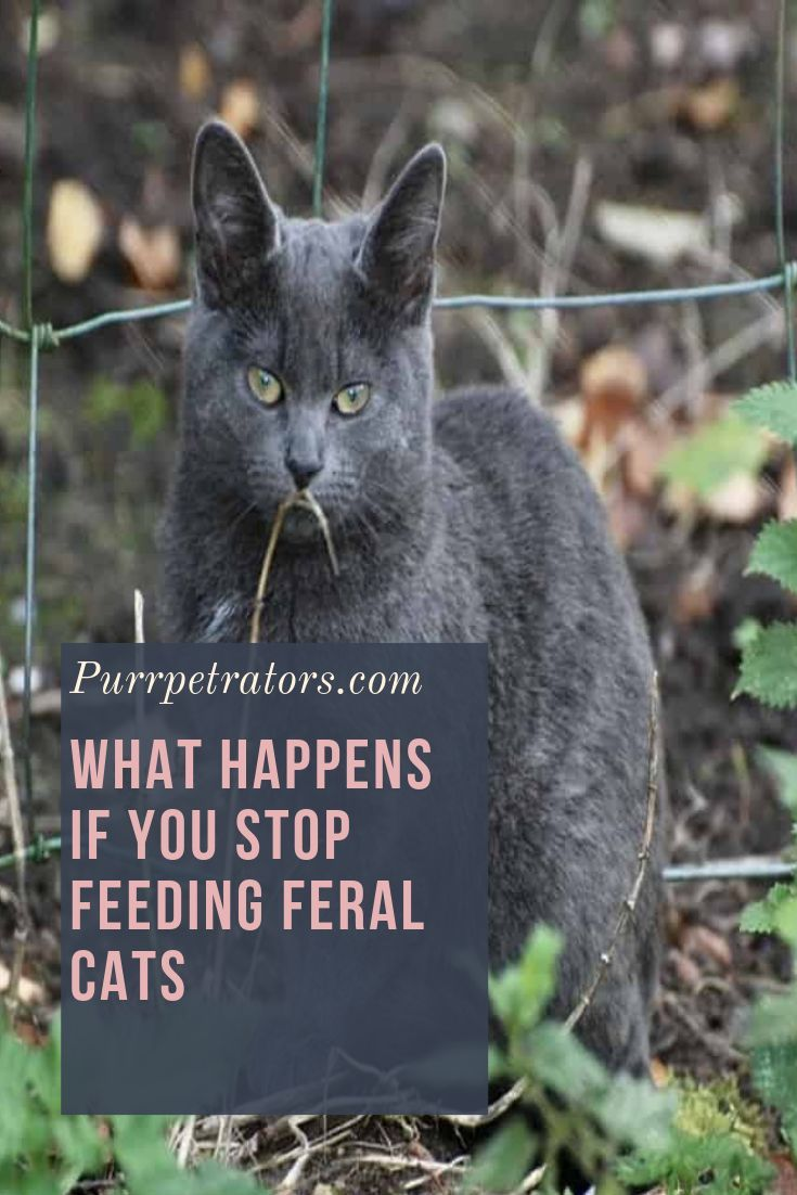 What Happens If You Stop Feeding Feral Cats Cats Feral Cats Cats Outside