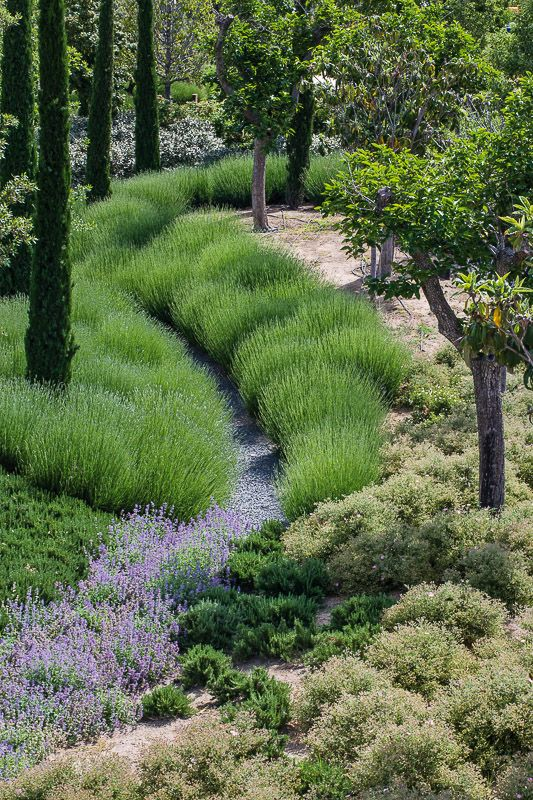 Landscaped drainage channel. Love the grasses.
