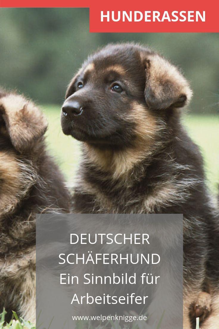Deutsche Schaferhund Welpen En 2020 Oise Ebene