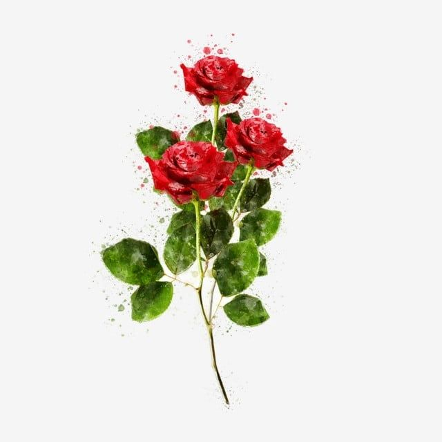 Ramo De Rosas Rojas Decoradas Rosa Roja Ramo De Flores Rojo Png Y Psd Para Descargar Gratis Pngtree In 2021 Red Rose Png Red Roses Red Rose Bouquet