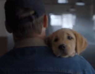Budweiser Puppy Love Superbowl Ad Animal Training Video Released