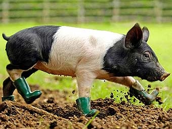 pig rain boots!!!
