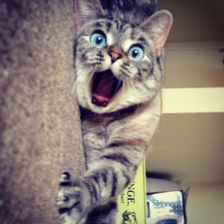 Beautiful shocked Cute blue eyes kitty.... click on picture to see more: