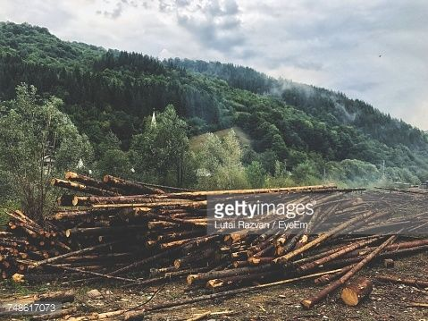 Stock Photo : Stack Of Logs In Forest Against Sky