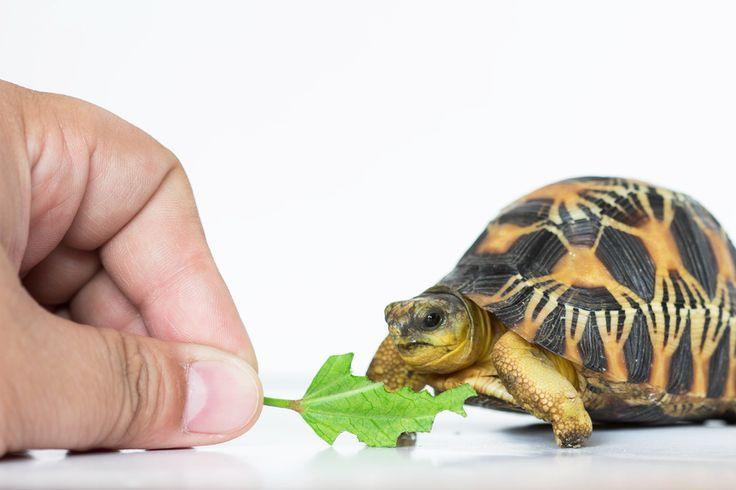 Velký výběr pro ještěrky, želvy, hady... zkrátka pro každého teraristu. www.bezednamiska.cz
