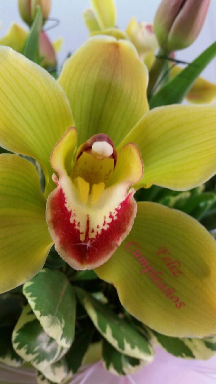 Orquídea impresa