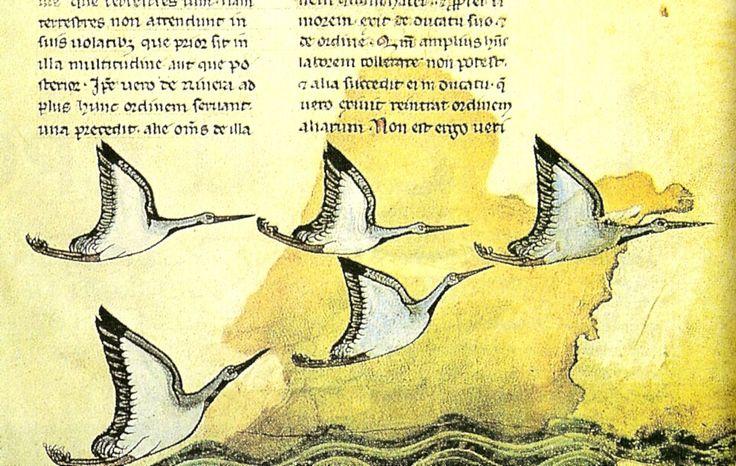 """Particolare dal """"De arte venandi cum avibus, sulla cui genesi il Moamin ebbe un ruolo importante"""