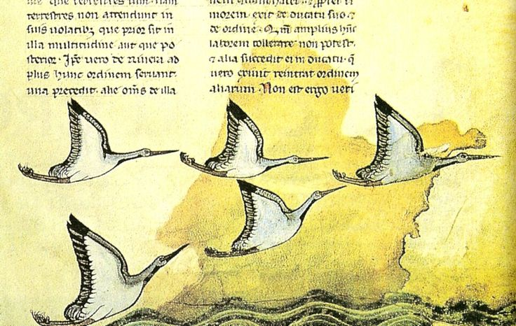 """De scientia venandi per aves  Particolare dal """"De arte venandi cum avibus, sulla cui genesi il Moamin ebbe un ruolo importante De scientia venandi per aves (Sulla scienza della con gli uccelli) è il titolo della versione latina di un trattato arabo sulla falconeria, il Kitāb al-mutawakkilī, opera di un certo Moamin (o Moamyn), sul quale ben poco si conosce[1]..  L'opera, fu tradotta nel 1250 per volere di Federico II di Svevia, è nota anche, nell'Europa medievale, come Moamin latino.  La…"""