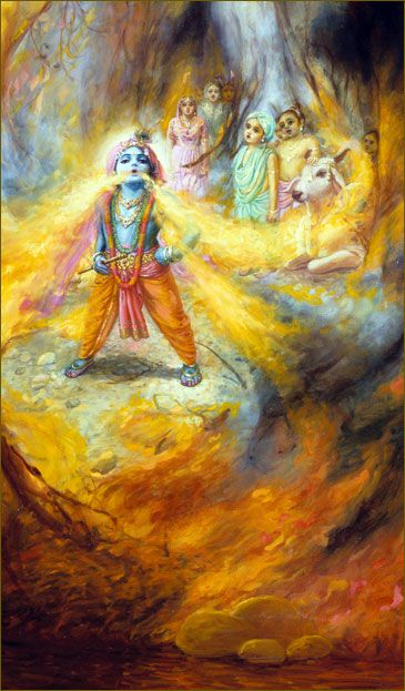 """""""Our Dear Kṛṣṇa! O Supreme Personality of Godhead! Our Dear Balarāma, the reservoir of all strength! Please try to save us from this all devouring and devastating fire. We have no other shelter than You. This devastating fire will swallow us all!"""" Thus they prayed to Kṛṣṇa, saying that they could not take any shelter other than His lotus feet. Lord Kṛṣṇa, being compassionate upon His own townspeople, immediately swallowed up the whole forest fire and saved them."""