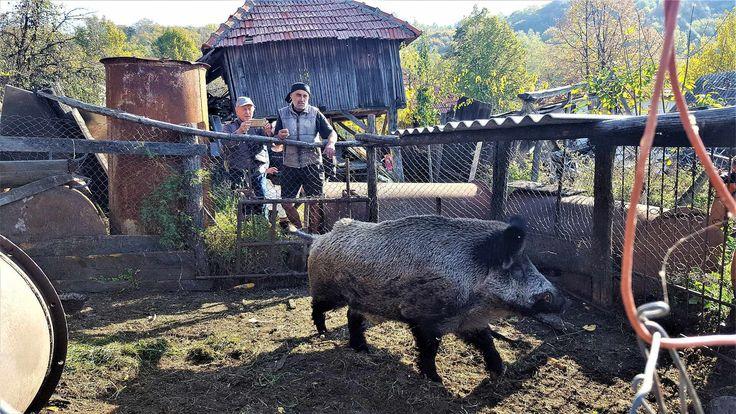 in viza la nea Aurica - Piatra, judetul Valcea