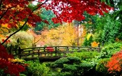 Nature Images Background Pictures