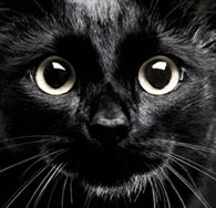 National Black Cat Day - 31st October 2013 in the United Kingdom.