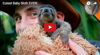 MFS VIRAL VIDS-2: Cutest Baby Sloth EVER!