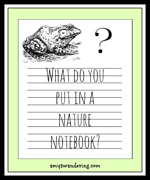 What Do You Put in a Nature Notebook? Ideas and links to free nature notebooking…