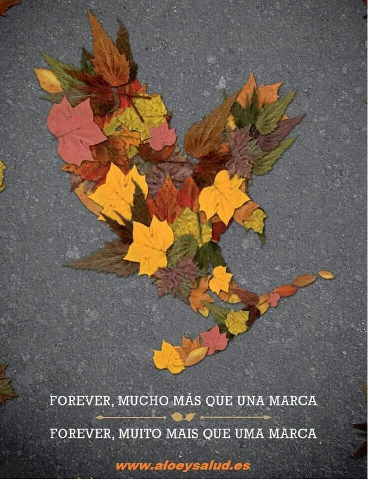 Forever mucho mas....