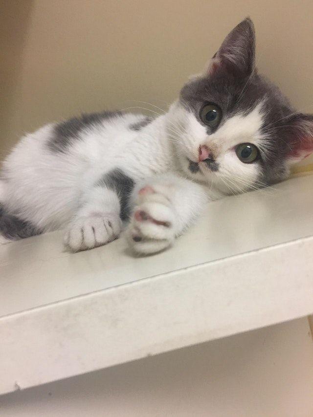 Reddit Kittens Newest Kitten Winter When She Was 6 Weeks
