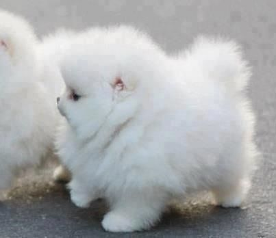 oh my gosh its like a cloud with legs!