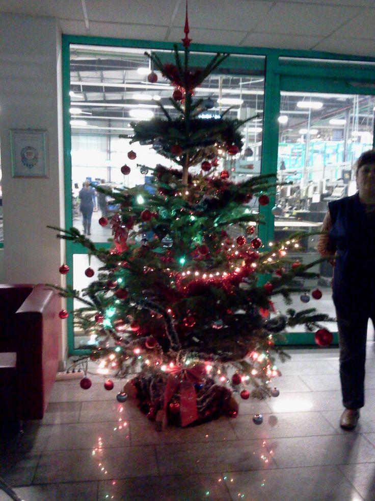 Traditional natural Christmas Tree
