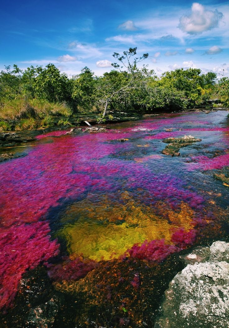 "Considered as one of the etiological wonders of the world, Caño Cristales or also known as ""the five colors river"" is a must-see in #Colombia!"