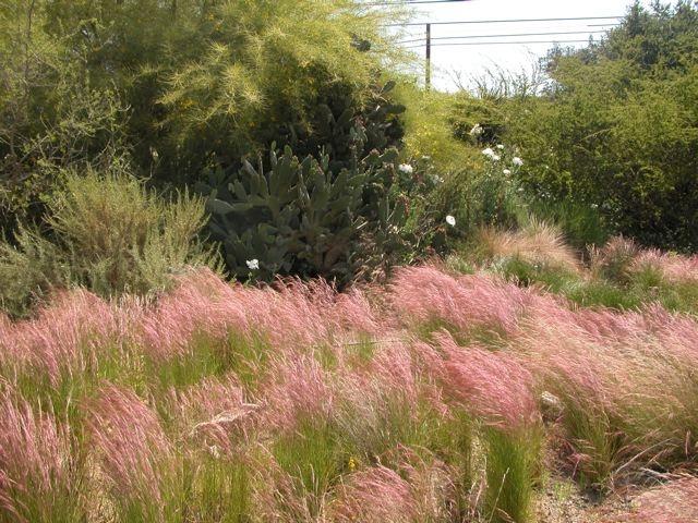 Purple Three Awn Grass Garden Pinterest Sun Wells