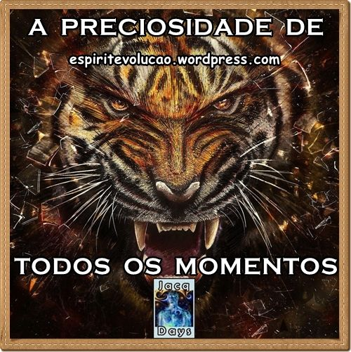 A Preciosidade De Todos Os Momentos Lsu Tigers Football Tiger Wallpaper Tiger