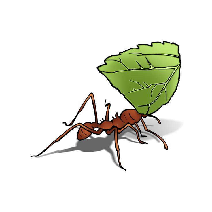 Perfect Earth - Leafcutter Ant