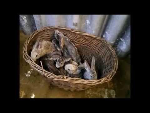 Кролики. Заселяем молодняк в яму
