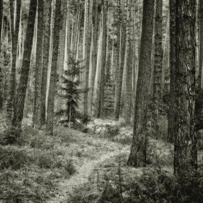 bwstock.photography - photo | free download black and white photos  //  #forest #path #tree