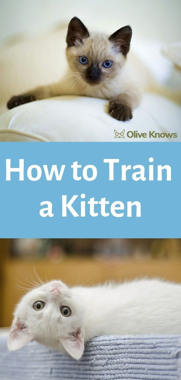 How to train a kitten – oliveknows.com – #a # kitten #man # olive … – Happy Katzen