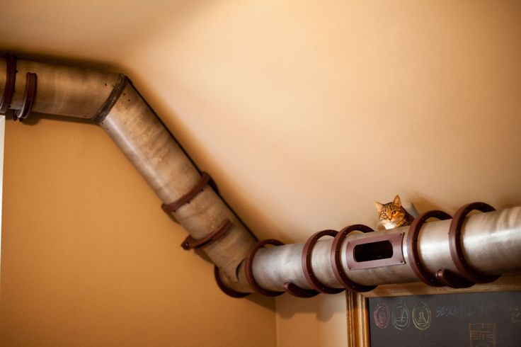 Cat tunnel: creative cat transportation system for your home office!