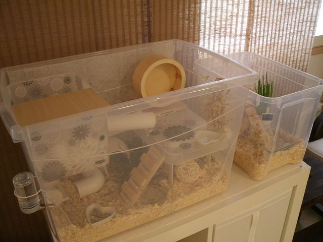 New bin cage duo without lids flickr photo sharing for Hamster bin cage tutorial