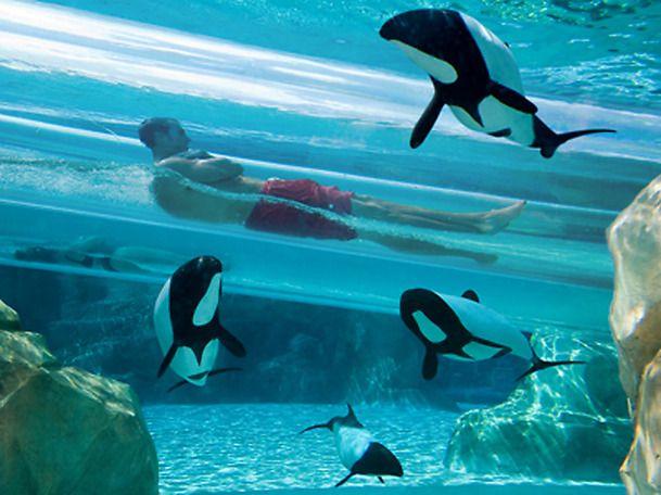 Cool water slides, aquatica water park, Florida USA