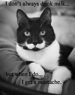 moustache-cat milk