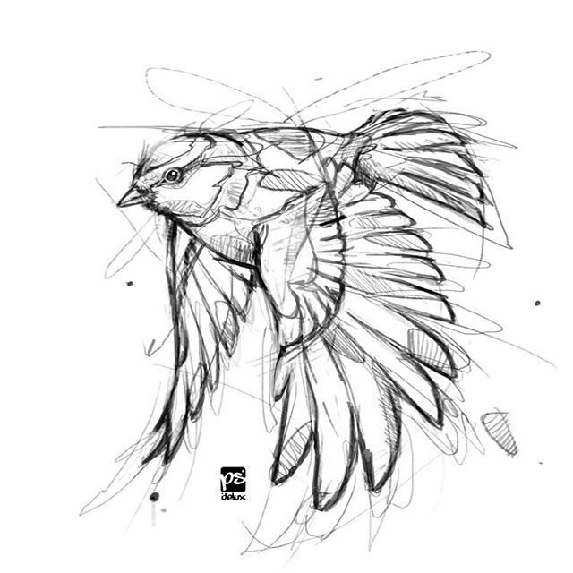 #bird #sketch #drawing #RePin von AT Social Media Marketing – Spezialisten für …